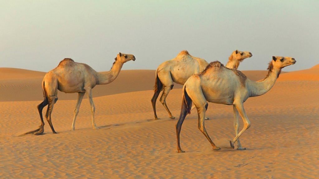 Por que mas startups deberian ser camellos que unicornios