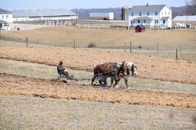 Revelación económica y métodos de los Amish